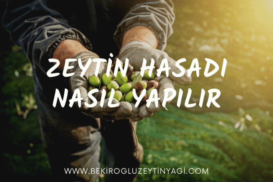 Zeytin Hasadi Bekiroglu Zeytinyagi